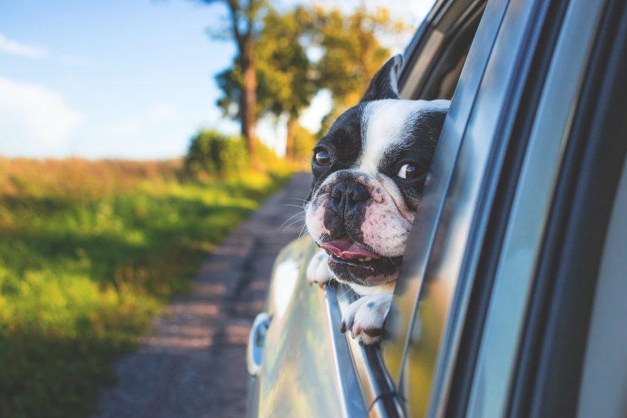 Qué necesitas para viajar con mascotas en el coche